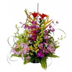 Lirio del Japón y Orquídeas