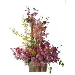 Variedad de Orquídeas