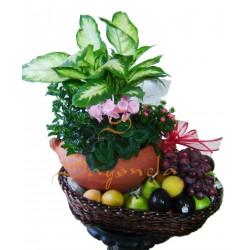 Arreglo de Frutas y Jardin de Plantas