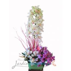 Orquídeas Multicolor