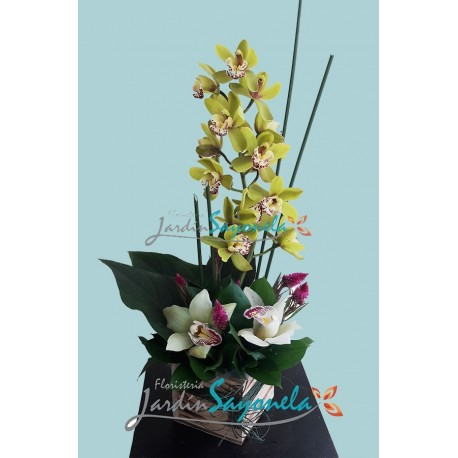 Orquideas Rustricas