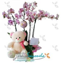 Jardín de Orquídeas peluche y globo