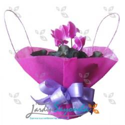 Planta Violeta de los Alpes