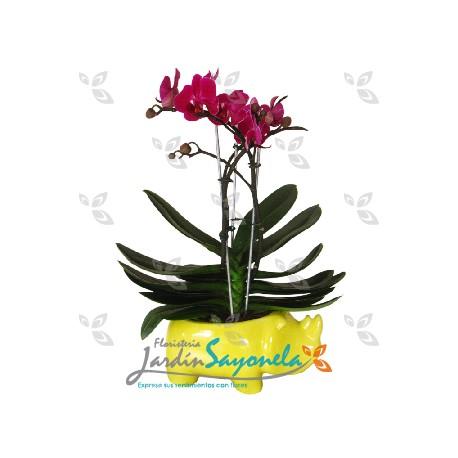 Planta mini Orquidea