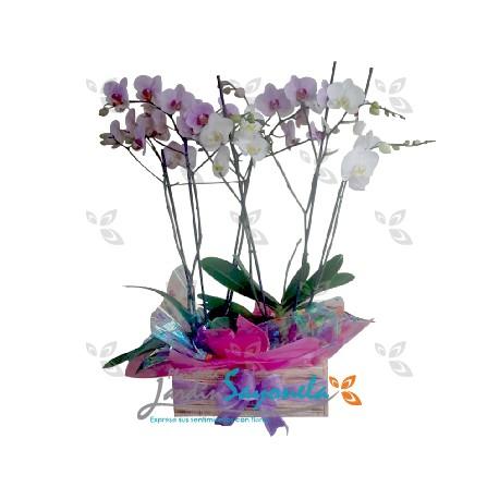 Jardín de Orquideas