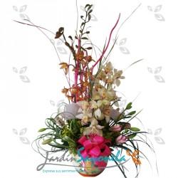 Orquideas surtidas y lirios