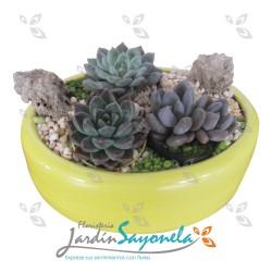 Mini jardín de suculentas