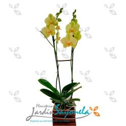 Planta de Orquideas